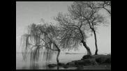 Autumn Tears - The Widowtree