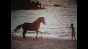 Black Stallion - Enya