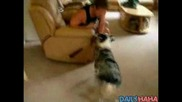 Добре Обучено Куче