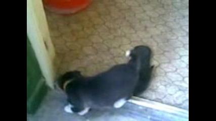 Страх От Котка