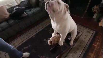 Куче на конче