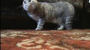 Пеещата котка