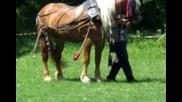 конни състезания - Попинци - 1.05.2010г