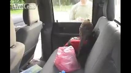 Видра не иска да излиза от колата :d