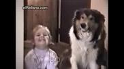 как се зъби кучето