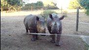 Сладки носорогчета!