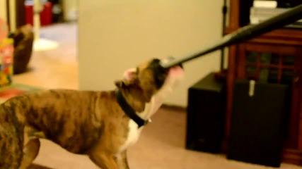 Куче обича да си играе с прахосмукачка