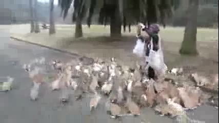 Момиче и много зайци в Япония