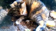 ❥ ❥ Autumn Cat { So Beautiful } ❥ ❥