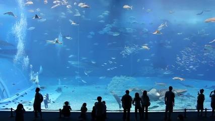 Огромен аквариум. Full Hd