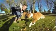 Кученце на два крака се учи да ходи!