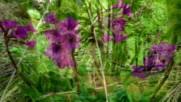 National Park Pila Bulgaristan Belgesel Film Yonetmen 2018 Hd