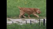 От 1 юли ветеринарите ще имат достъп до национален регистър за домашни животни