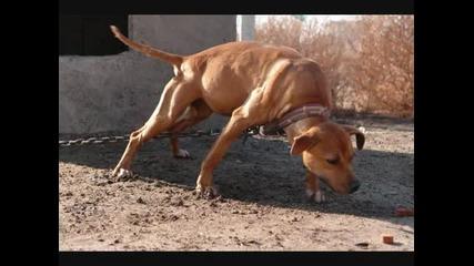 madlinepitdogs