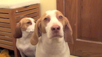 Доволни кучета след баня !