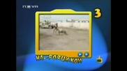 Господари На Ефира - Топ 5 Най - Лудите Овце