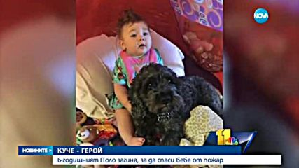Куче загина в пожар, спасявайки бебе
