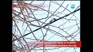 Жители на град Нови Искър се оплакват от постоянна липса на ток - Часът на Милен Цветков