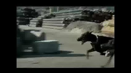Freerun - Бягат От Куче