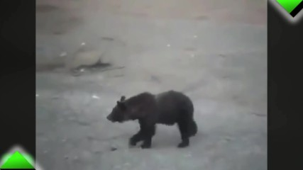 Хора срещу мечки- само в Русия