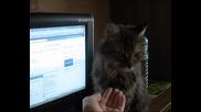 Котка дава лапа