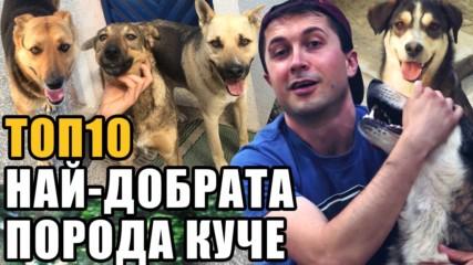 Топ 10 Коя е най-добрата порода кучета?