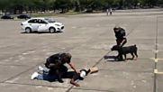 Безкомпромисно обучение на полицейско куче против терористи, преди олимпийските игри в Бразилия!
