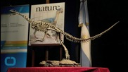 New Fossil Reveals Velociraptor Sported Feathers