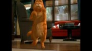 Garfield - Chae Shukarie - Кючек