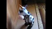 Виж Лудата крава Гица яко смях
