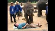 Този слон знае каде да бута :d
