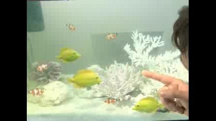 Упоени Риби - Какво Следва...