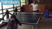 Когато няма с кого да играеш тенис на маса ...