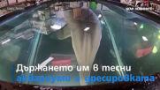 Делфини роботи може да сменят истинските