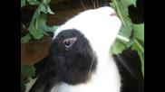 Моето сладко зайче Стили похапва млечок и получава погалвания
