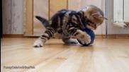 Малки котета и топка...