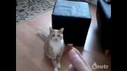 Котка хваща храната си във въздуха
