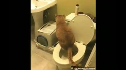 Най - културната котка в света.:)