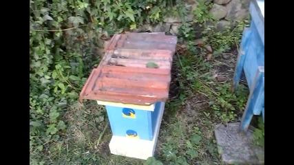 Пчелинче