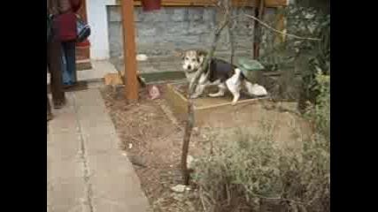 Кучето Уили 1