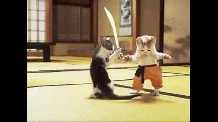 Нинджа Котки [100% Смях] - Високо Качество