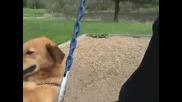 Куче Което Обича Да Се Люлее
