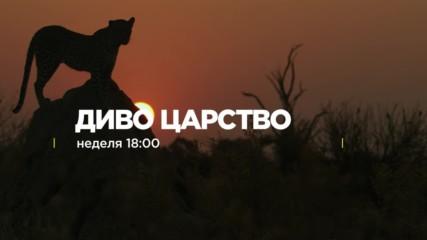 Диво Царство - неделя 18:00