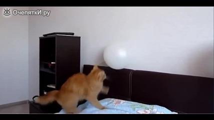 Котка се забавлява с балон!!!