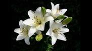 Константин - Изсъхнали цветя 2009 New