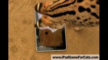 И тигрите се радват на новите таблети