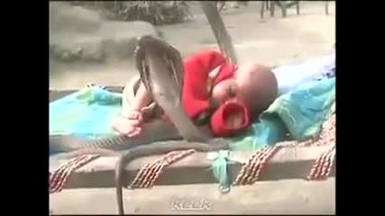 Вижте как четири кралски кобри пазят едно бебе! Аз не бих си оставила детето така!