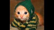 Най - Сладките Котета На Света