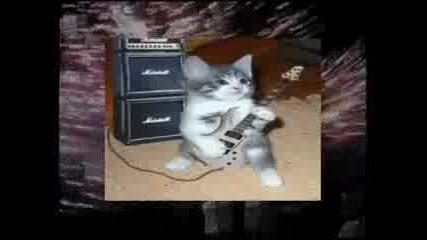 Луд Смях Котки Пеят