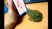 Жаба си играе на телефон - смях